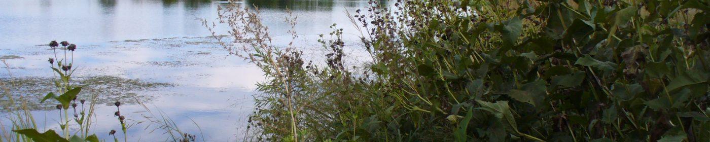 Farmington Lakes
