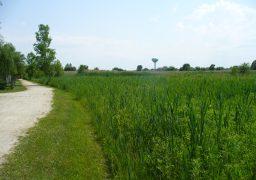 Morgan Creek Prairie Wetland 2