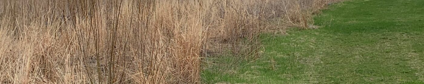 hunt club prairie wetland